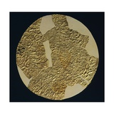 Gold Disk Showing a Figure of a Warrior Toltech Myth