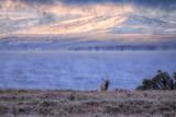 Bull Elk at Continental Divide - Yellowstone Lake