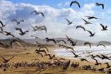 Beach Birds  Half Moon Bay  California Coast