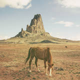 Horses at Mount Agathla  Monument Valley  Arizona