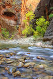 Autumn in The Virgin Narrows  Southern Utah