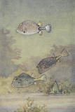 A Painting of Two Species of Trunkfish and a Scrawled Cowfish