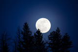 A Full Moon Rising over Silhouetted Trees