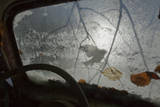 Silhouette of a Blue Tit (Cyanistes / Parus Caeruleus) Seen Through an Old Car Windscreen  Sweden