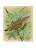 A Painting of a Red-Eyed Vireo Singing