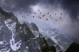 Chilean Flamingos (Phoenicopterus Chilensis) in Flight over Mountain Peaks  Chile