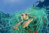 Loggerhead Turtle (Caretta Caretta) Trapped in a Drifting Abandoned Net  Mediterranean Sea