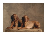 Two Short-Haired Hungarian Vizsla Pointers (detail)