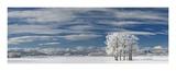 Frosty Trees  Canada