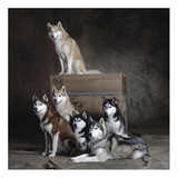 Siberian Huskies (detail)