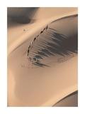 Camel Caravan in the Sahara Desert  Mauritania