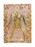 Arterial and Venous System  'Treatise on the Human Body' 1292