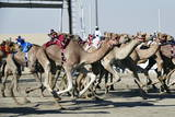 Camel Racing at Al Shahaniya Race Track  20Km Outside Doha  Qatar  Middle East
