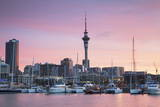 Viaduct Harbour and Sky Tower at Sunset  Auckland  North Island  New Zealand  Pacific