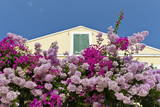 Bougainvillea and Yellow Building with Green Shutters Against Blue Sky