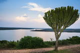 Cactus Tree Above the Kazinga Channel Linking Lake George and Lake Edward at Sunset