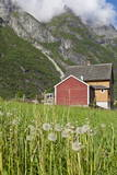 House and Field with Dandelions
