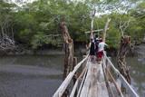 Curu Wildlife Reserve  Costa Rica  Central America