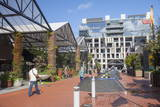 Outdoor Shopping Mall in Britomart Precinct  Auckland  North Island  New Zealand  Pacific