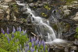 Cascade with Lupines  Iceland  Polar Regions