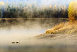 Wildfowl on Snake River Surrounded by a Cold Dawn Mist