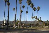 Palm Trees Behind Beach