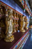 Buddha Collection under the Golden Maitreya Statue  Beopjusa Temple Complex  South Korea  Asia