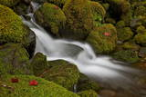 Cascade Through Moss-Covered Boulders