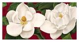 Magnolie in Fiore