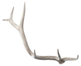 Weathered Resin Elk Antler*