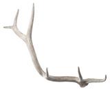 Weathered Resin Elk Antler*