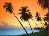 Caribbean  Antigua and Barbuda  Morris Point