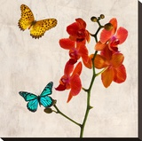 Orchids & Butterflies II