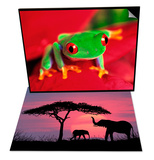 Red-Eyed Tree Frog & Silhouette of Elephants and Tree Set
