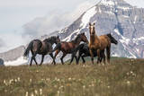 Horses Along the Rocky Mountain Front  Montana