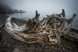 One of Many Trees Washed Up Upon the Shore of Alki Beach  West Seattle  Washington