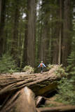 Young Woman Hiking in Humboldt Redwoods State Park  California