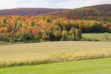 USA  Vermont  Montgomery Corn Farming and Fall Foliage