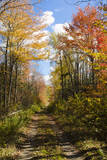 USA  Maine  Bar Harbor Path in Fall Colors of Red and Gold Foliage