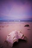 A Clam Shell Sits on a Beach While a Rainbow Appears on the Island of Mamutik  Borneo  Malaysia