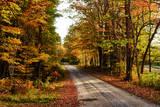USA  Maine  Bethel Wood Trail with Fall Foliage