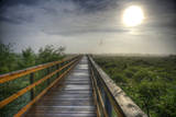 Paynes Prairie State Preserve  Florida: a View of the Prairie During Sunrise