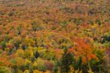 USA  New Hampshire  Littleton Autumn Foliage in Mountains
