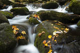 Smoky Mountain National Park  Tennessee: a Small Stream Flowing in Roaring Forks