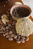Belize  Punta Gorda  Agouti Farm Coco Beans  Allspice and Ginger