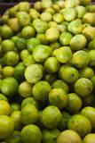 USA  Florida  Homestead  Florida Key Limes