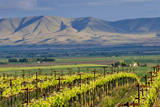USA  Washington  Yakima View from One of the Red Willow Vineyards