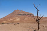 Kunene  Namibia Dead Tree in Desert Landscape Near Puros Conservancy