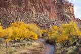 USA  Utah  Capitol Reef  Sulpher Creek  Trees and Waterpocket Fold