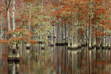 USA  Georgia  Cypress Swamp with Fall Reflections